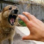 В Кирове на улице Лепсе обнаружили бешеную собаку