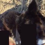 8 тысяч кировчан требуют наказать убийцу собаки