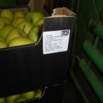 В Кирове уничтожили 73 кг санкционных продуктов
