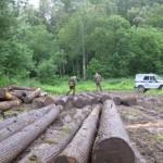 С начала года в области выявлено 124 факта незаконной рубки леса