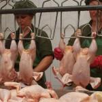 Область столкнулась с отсутствием собственного мяса птицы