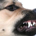 За год собаки покусали почти 1000 жителей области