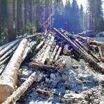 Опубликован «черный список» в лесной отрасли региона