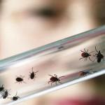 В Кировской области зарегистрирован первый укус клеща
