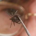 В Кировской области появился первый заболевший клещевым энцефалитом