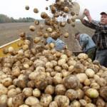 В Кировской области разработали программу развития сельхозкооперативов
