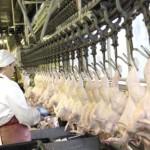 В Кировской области обнаружена продукция, зараженная вирусом птичьего гриппа