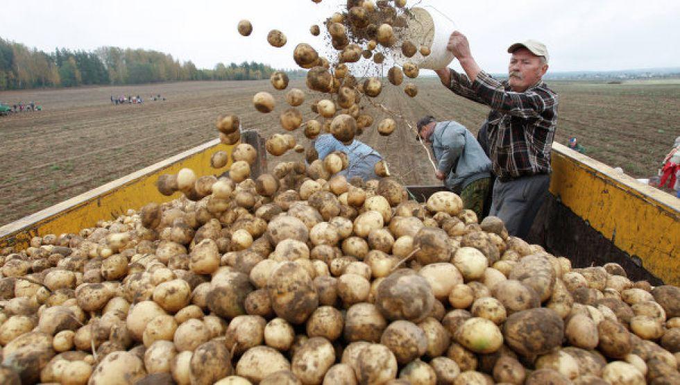программа развития сельхозкооперативов