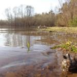 7 мая Вятка максимально разольется и может затопить прибрежные территории