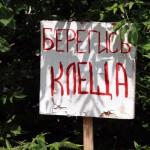 В Кировской области проходит пик активности клещей