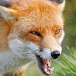 Более 2000 жителей области пострадали от укусов животных в этом году
