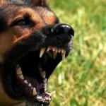 В Омутнинске полицейские застрелили собаку, которая бросалась на прохожих