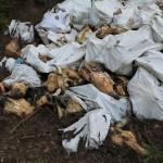 В Малой Субботихе нашли свалку с расчлененными трупами коров и лошадей