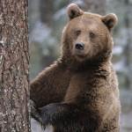 Японцы заинтересовались вятским лесом