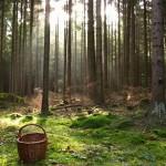 Четыре дня жительница поселка Вахруши выживала в лесу