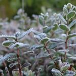 МЧС предупреждает о ночных и утренних заморозках в Кировской области