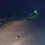 В Кировской области водитель «Шкоды» насмерть сбил пешехода и скрылся
