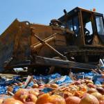 В 2017 году в Кирове из оборота изъяли 4,5 тонны санкционных фруктов и овощей