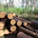 Только за неделю в Кировской области выявлены семь фактов незаконной рубки леса