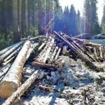 В Лузе осужден лесоруб, причинивший ущерб на сумму более 1 миллиона рублей