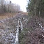 В Кировской области упавшее дерево задавило рабочего: следком возбудил дело