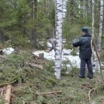 Минлесхоз через суд взыскивает с предприятия почти 1,5 млн рублей за незаконную рубку леса