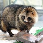 В Кировской области зарегистрированы первые случаи бешенства животных в новом году