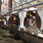 Налоговая банкротит «Слободской молочный комбинат»