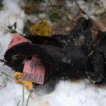 Установлен один из виновников свалок с останками животных