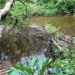 На защиту рек Кировской области выделят более 11 миллионов рублей из федерального бюджета