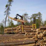 Власти региона одобрили изменения лесного инвестпроекта компании «Алмис»