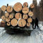 В Кировской области вынесен приговор черному лесорубу: ущерб лесному хозяйству составил почти 4 млн рублей