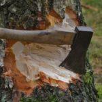Житель Санчурского района незаконно нарубил лес на 300 тысяч: дело направлено в суд