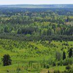 У Кировской области появится лесной план за 6,2 млн рублей