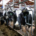 Кировские аграрии направят предложения по поддержке молочной отрасли в правительство области