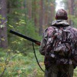 В Кировской области принимают заявки для участия в распределении разрешений на добычу лося и медведя