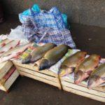В Котельниче на несанкционированных местах торговли продавали опасную речную рыбу