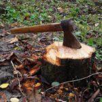 В Санчурске выявлен факт незаконной рубки леса на сумму более 1 млн рублей: возбуждено уголовное дело