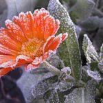 Синоптики: в большинстве районов Кировской области ожидаются сильные заморозки до -7 градусов