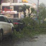 В Кирове сильный ветер повалил несколько деревьев