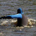 В Кирове в районе Нового моста утонул подросток: тело до сих пор не нашли