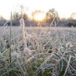 В Кировской области снова ожидают заморозки до -2 °C