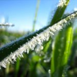 В Кировской области ожидаются арктическое вторжение и заморозки