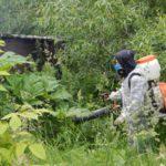 В Кировской области начали опрыскивать обочины дорог от борщевика