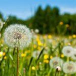 Погода в Кировской области: в выходные ожидается резкое потепление