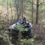 Свалку медицинских отходов у деревни Башарово ликвидируют в течение месяца