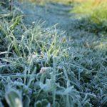 В Кировской области снова ожидаются заморозки до -3 градусов: МЧС объявило метеопредупреждение