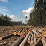 В Кировской области за разрушение среды обитания животных предъявили иски на 800 тысяч рублей