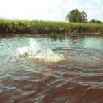 В Белохолуницком районе утонул 11-летний мальчик