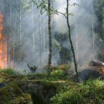 Метеопредупреждение: в лесах Кировской области устанавливается пожарная опасность четвертого класса